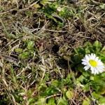 Nadciąga wiosna